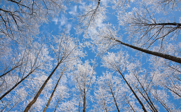 Winter trees against the sky